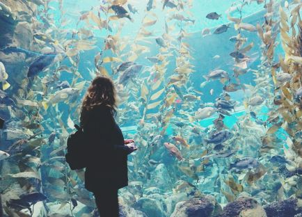 Ripley's Aquarium, Toronto, ON
