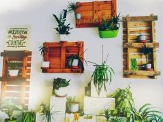 Indoor Garden, Grassy Hopper, Gzira