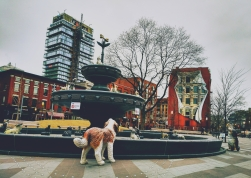 A fountain/dog-shrine in Toronto, ON.