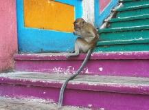 Monkey at Batu Caves