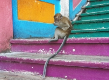 Monkey at Batu Caves